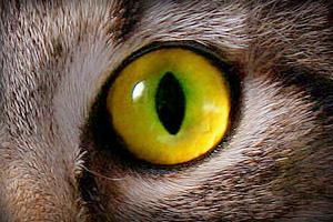 Другая жизнь кошек - Форум Сириус - Торез