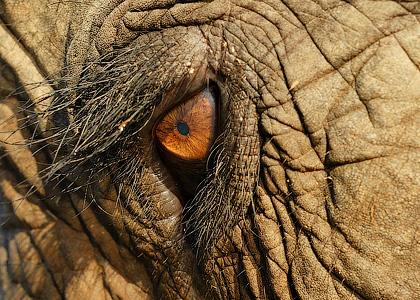 Слоны и люди - Форум Сириус - Торез