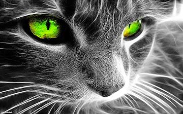 Кот в мешке. Хламидиоз объединяет. Инфекционная версия событий - Форум Сириус - Торез