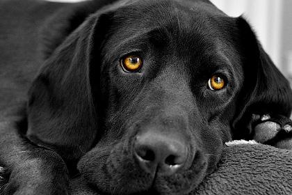 Секреты собак - Форум сириус - Торез