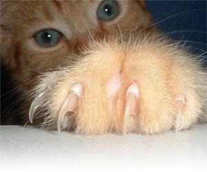 Осторожно: болезнь кошачьей царапины - Почему лимфоузлы требуют внимания?