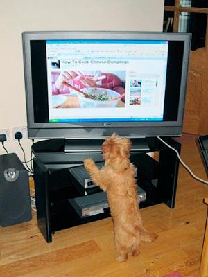 В Великобритании начался эксперемент - показывают рекламу собакам - Форум Сириус - Торез