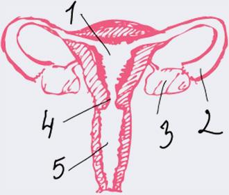 Репродуктивная система - В организме происходят изменения? Что нужно знать о критических днях
