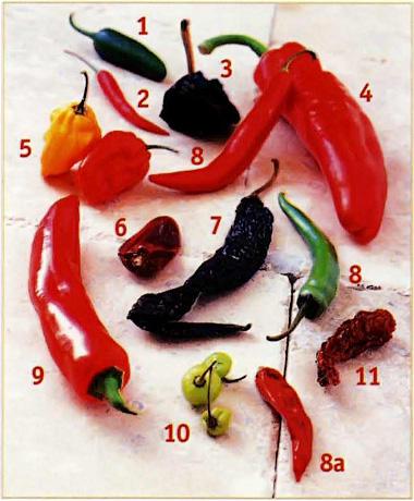 Классификация горького перца