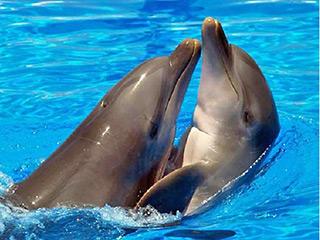 Правда, что дельфины называют друг друга по имени? - А правда, что... - Умные ответы на глупые вопросы - Форум Сириус - Торез