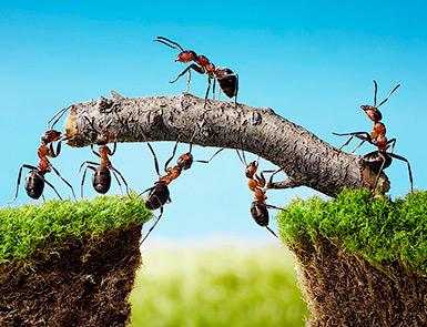 Как стать своим в коллективе? Как влиться в коллектив? - Форум Сириус - Торез