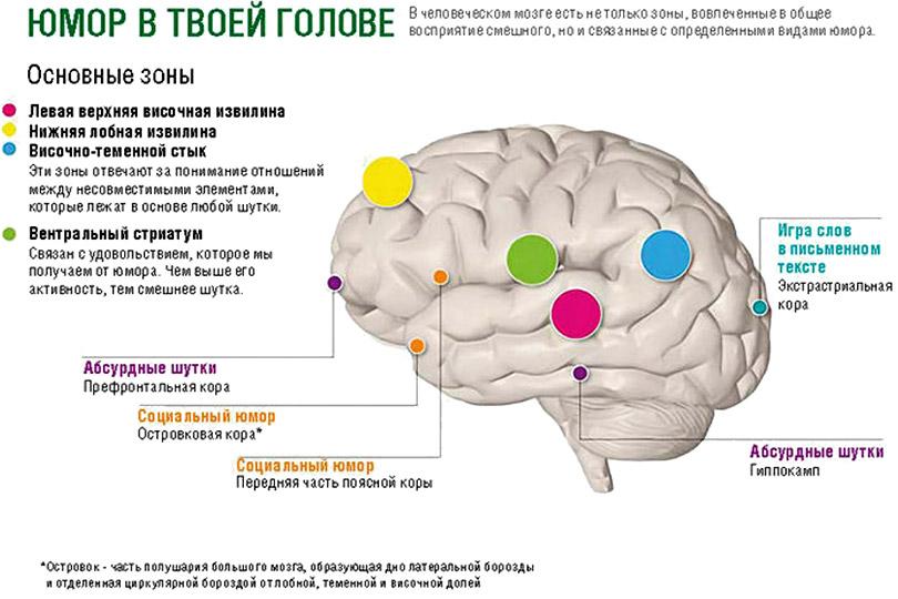 Юмор в твоей голове - Почему мы смеемся? Гипотезы и исследования происхождения смеха - Форум Сириус - Торез