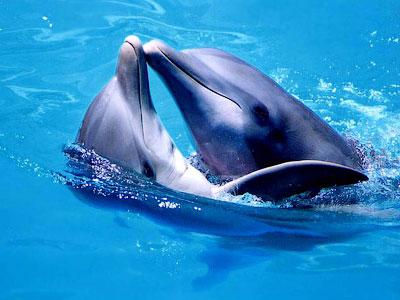 Загадки дельфинов