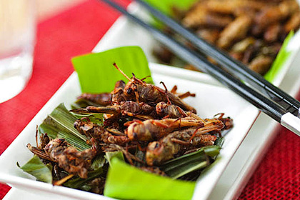 Экстремальная кулинария - экзотическая пища