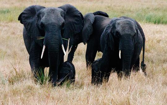 Южная Африка на границе с Национальным парком Крюгера