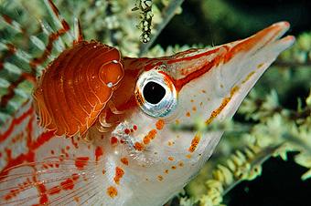Самые распространенные паразиты рыб - ракообразные - Мы не пара Кто телу хозяин Всё что нужно знать о человеческих паразитах - Форум Сириус - Торез