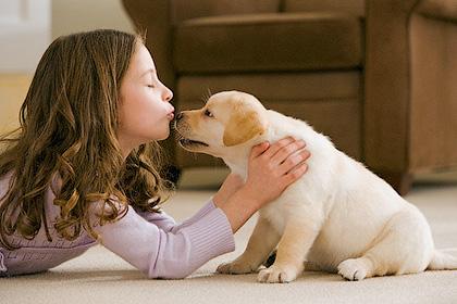 Что нужно знать перед тем, как завести собаку? - Форум Сириус - Торез