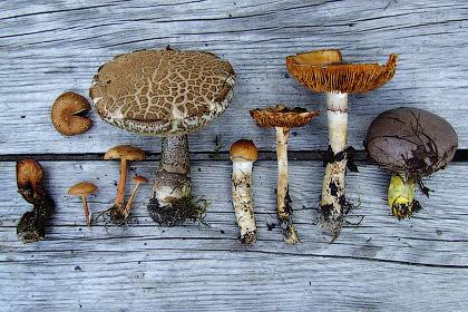 Споры о грибах
