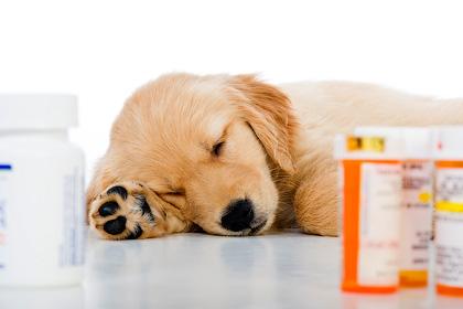 Заболевания щенков - Форум Сириус - Торез