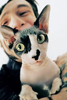 Лунные кошки. Сфинкс - донской, петерболд, канадский