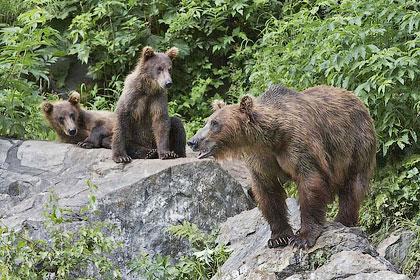 Охота на медведя в одиночку