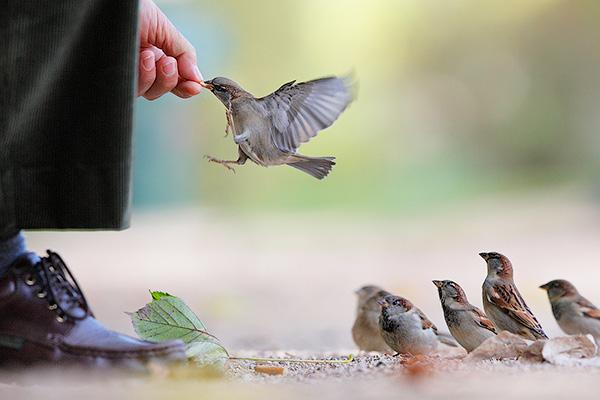 Человек должен учиться заботиться о слабом - Очеловечились. Дикие нравы животных и людей - Форум Сириус - Торез