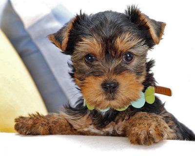 Необходимые вещи для щенка в доме - Форум Сириус - Торез