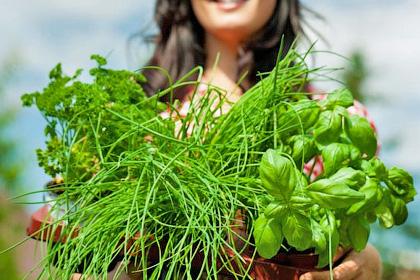 Зелень с грядки - богатый источник витаминов