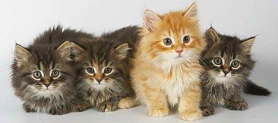 В Латвии окончательно запретили топить котят