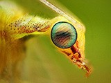 Уникальные насекомые найденные с помошью Интернет