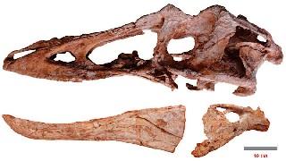 «Длинноносый» цяньчжоузавр   Взлет Тираннозавров