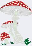 Откуда берется грибок  Профилактика лечения микозов