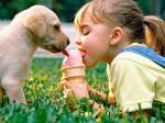 Чем нельзя кормить животных
