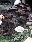 Железный метеорит Вилламет   Почему падают метеориты