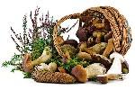 Мифы и факты о грибах
