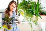 Уход за экзотическими растениями  Цветущие в холода