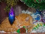 Сон в новогоднюю ночь год кота